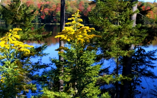 Trees turning in the beginning of fall with the lake in the background reflecting the trees